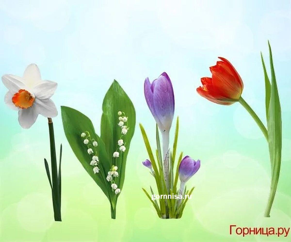 Тест для женщин - Выберите цветок и узнайте, что в Вас особенно мило