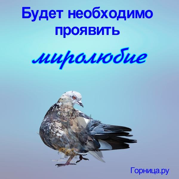 Голубь - https://gornnisa.ru/