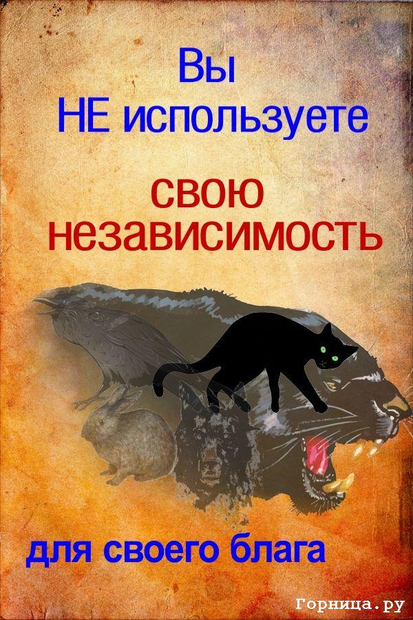 Кошка - https://gornnisa.ru/