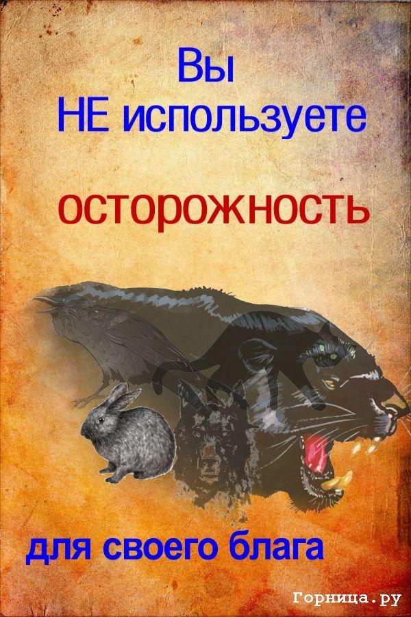 Заяц - https://gornnisa.ru/