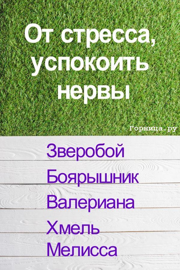От стресса - https://gornnisa.ru