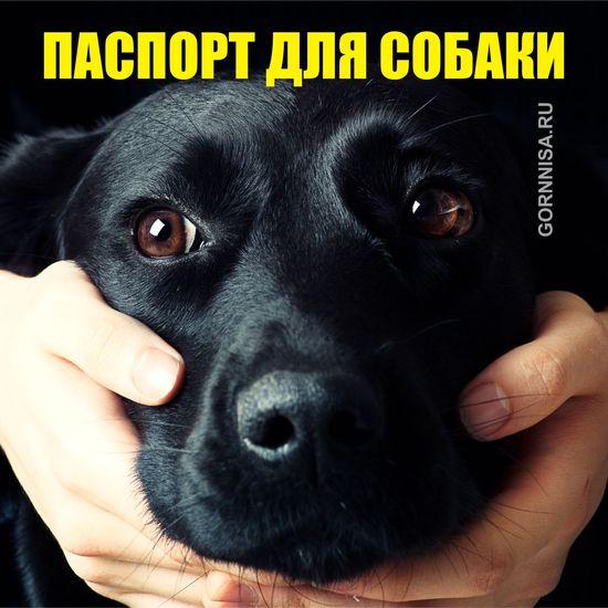 Паспорт для собак - система распознавания питомцев по форме носа