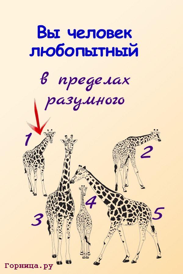 Жираф 1 - https://gornnisa.ru/