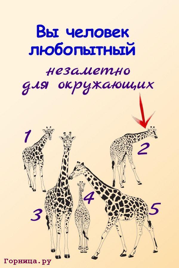 Жираф 2 - https://gornnisa.ru/