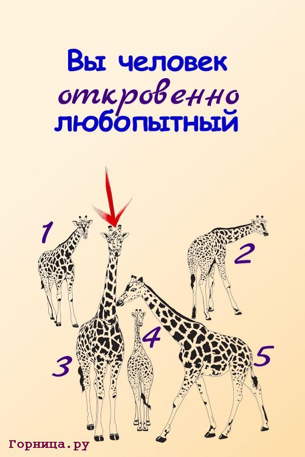 Жираф 3 - https://gornnisa.ru/