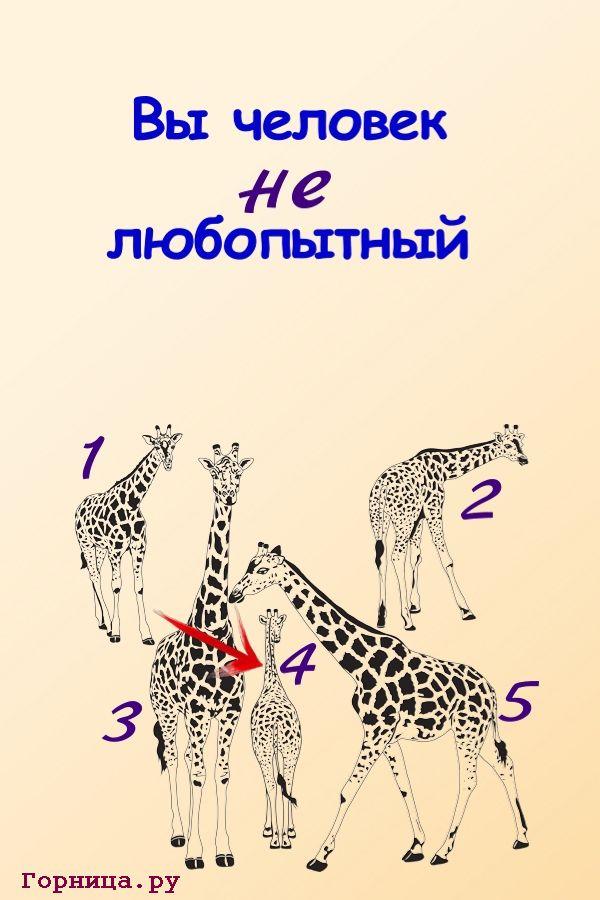 Жираф 4 - https://gornnisa.ru/