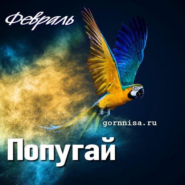 Февраль - попугай - https://gornnisa.ru