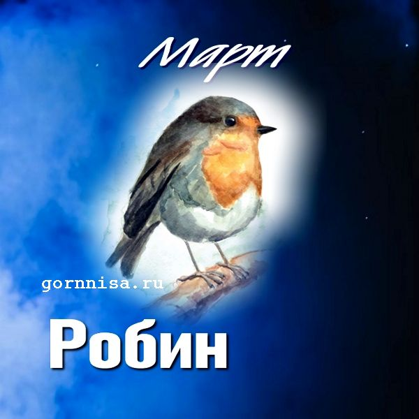 Март - робин - https://gornnisa.ru