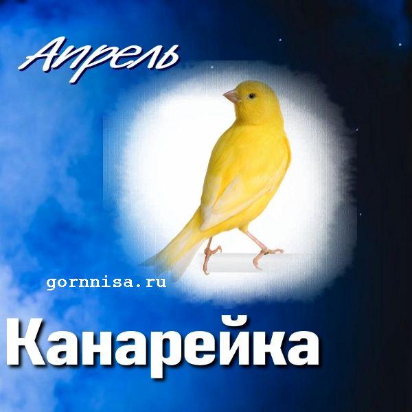 Апрель - канарейка - https://gornnisa.ru