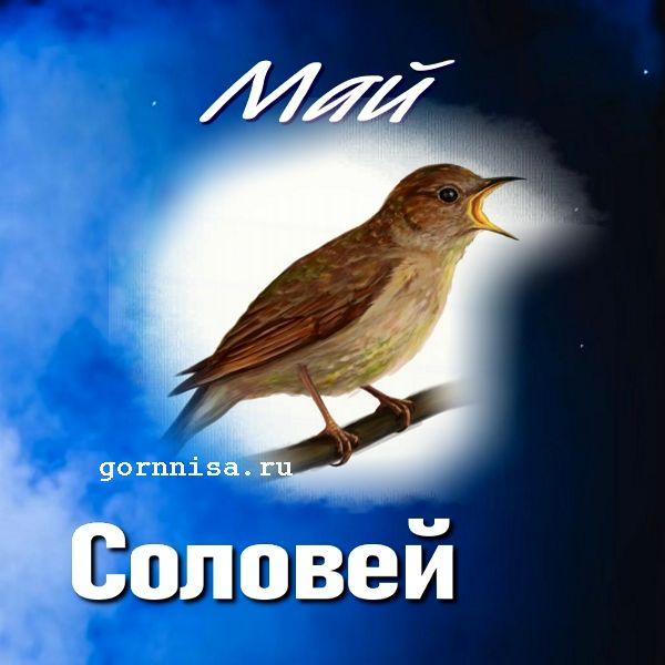 Май - соловей - https://gornnisa.ru