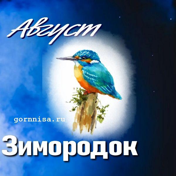 Август - зимородок - https://gornnisa.ru