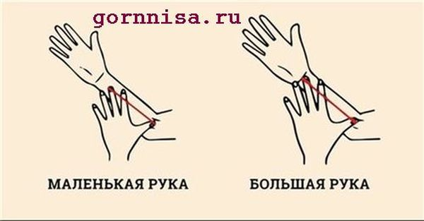 Характеристика личности по размеру руки. Измерение руки
