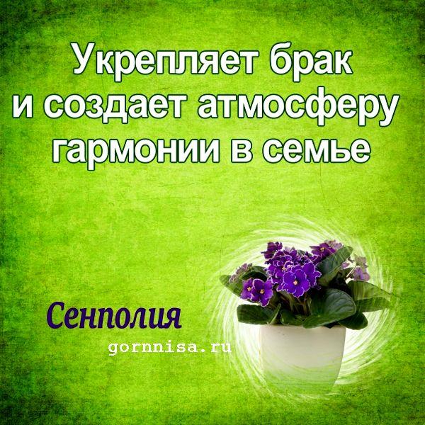 Живые обереги. Особенные свойства комнатных растений для вашего блага  https://gornnisa.ru/