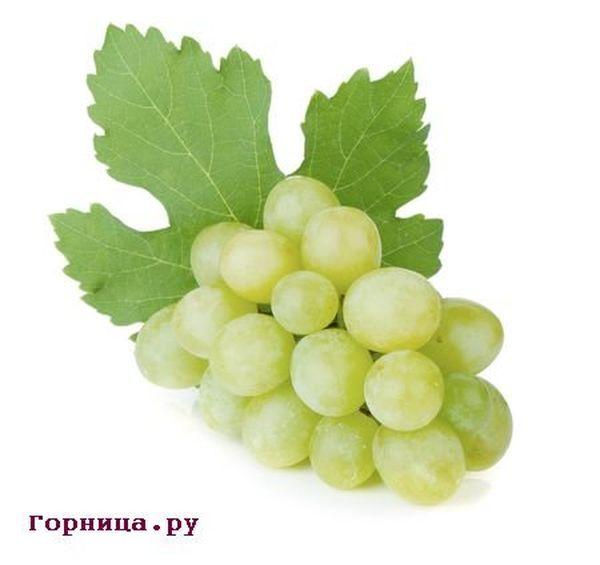 Преимущества зеленого винограда - https://gornnisa.ru