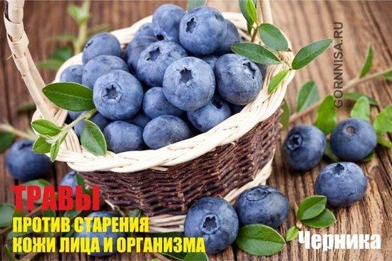 Черника - https://gornnisa.ru