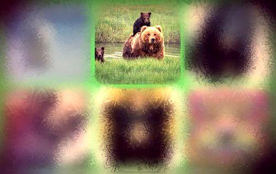 #2 Медведица с медвежатами - https://gornnisa.ru/