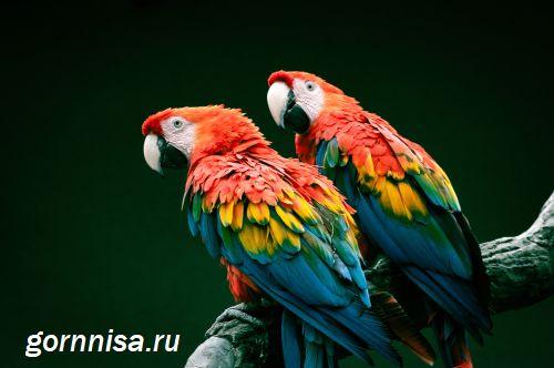 Февраль - Попугай - https://gornnisa.ru/