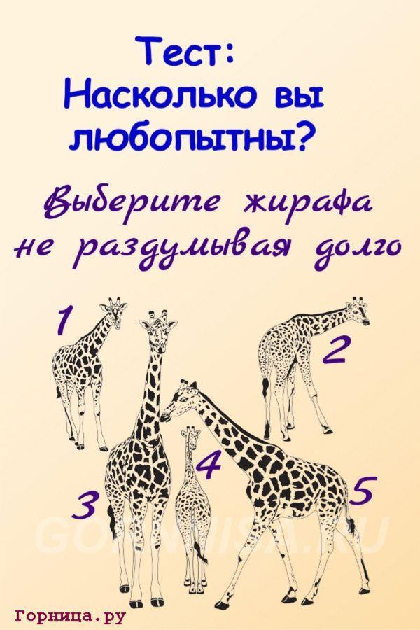 Тест - Насколько Вы любопытны - https://gornnisa.ru/