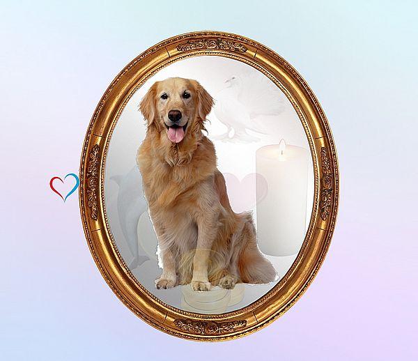 Собака - https://gornnisa.ru/