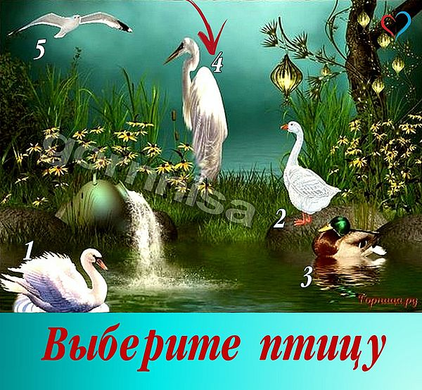 Птица 4