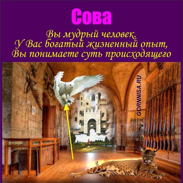 Сова - https://gornnisa.ru