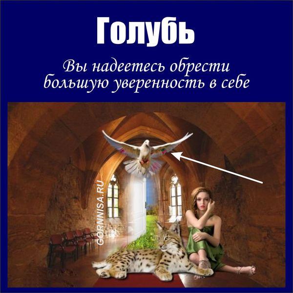 Голубь - https://gornnisa.ru