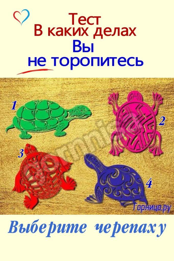 Тест - В каких делах Вы не торопитесь - выберите черепаху - https://gornnisa.ru/