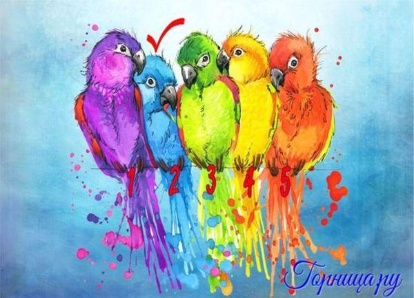 #2 Синий попугай