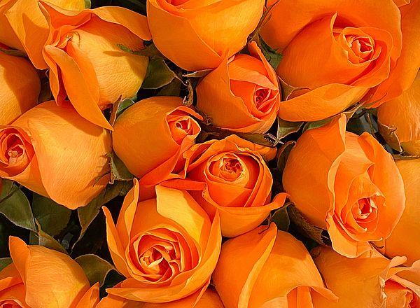 Тест - Что порадует вас в скором времени https://gornnisa.ru/ 1 Оранжевые розы