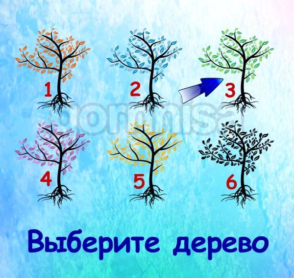 Тест на ваш потенциал - на какой вы стадии https://gornnisa.ru/ Дерево 3