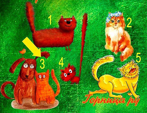 Котик 3
