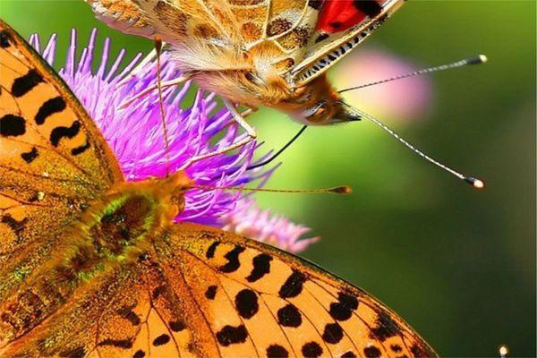 #3 Бабочки