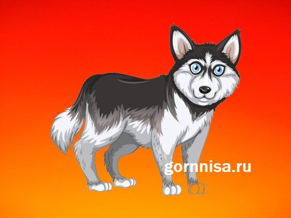 Тест личности - Каких качеств Вам не хватает https://gornnisa.ru/ Собака 2