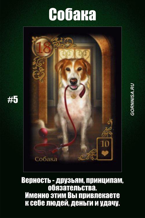 Карта #5 – Собака