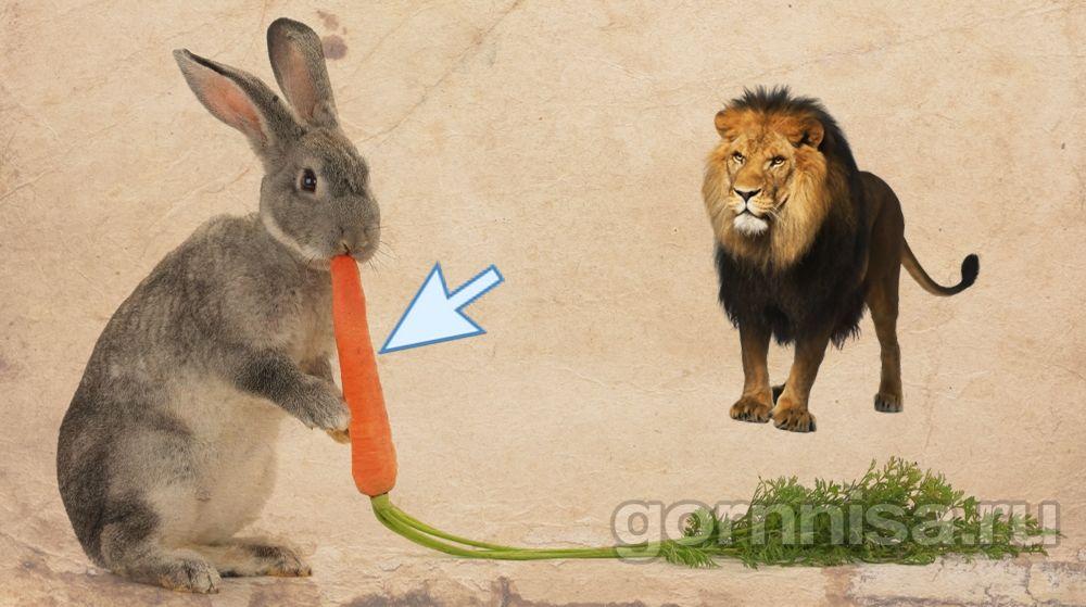 2- морковь