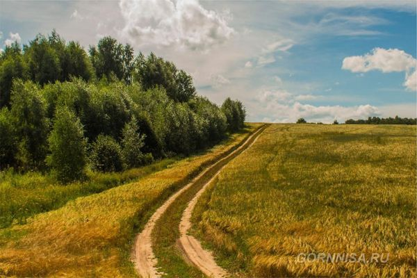 #4 Проселочная дорога