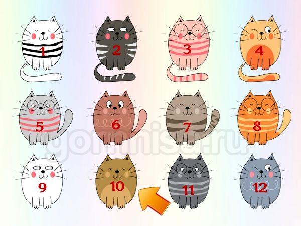 Котик 10