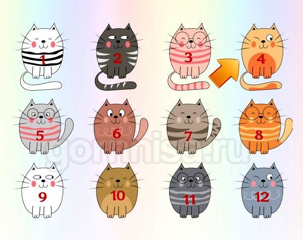 Котик 4