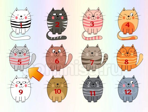 Котик 5