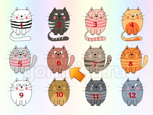 Котик 6